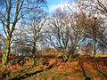Bickerton - Bickerton Hill Woodland.jpg