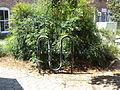 Bicycle Rack, SE corner of Tooms St parking lot, Valdosta.JPG