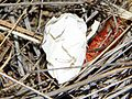 Bird Egg Shell - Flickr - GregTheBusker.jpg