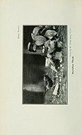 Bird notes (1923) (14754949762).jpg
