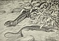 Blätter für Aquarien- und Terrarien-Kunde (1908) (20198621140).jpg