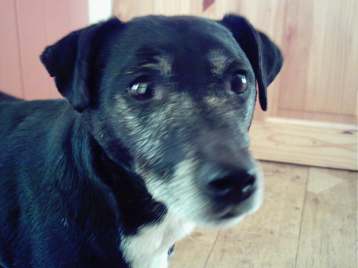 Dog Developed Black Spot On Tongue