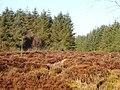 Blairadam Forest - geograph.org.uk - 157555.jpg