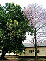 Blossom trees.jpg