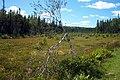 Bog near Bear River Road, PEI (6141722625).jpg