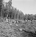 Bosbewerking, arbeiders, werkzaamheden, boomstronken, Bestanddeelnr 253-5580.jpg