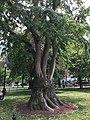 Boston, MA, USA - panoramio (143).jpg