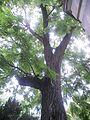 Botanička bašta Jevremovac 022.JPG