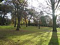 Botanics in Winter. - geograph.org.uk - 90479.jpg