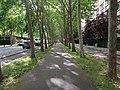 Boulevard Auguste-Blanqui, Paris 13e.jpg