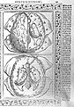 Brain, Berengarius, 1523 Wellcome L0000996.jpg