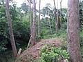 Branksome, ravine in Martello Woods - geograph.org.uk - 1427572.jpg
