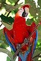 Brazil-00690 - Macaw (48972661061).jpg