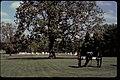 Brices Crossroads National Battlefield Site (13d284e9-b9a6-4dc8-bd2d-b746039cfe04).jpg