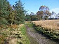 Brindley Bottom, Cannock Chase - geograph.org.uk - 275329.jpg