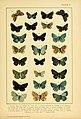 British and European butterflies and moths (Macrolepidoptera) (Plate V) (6466288855).jpg
