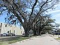 Brookhollow Esplanade Oaks, Jefferson Parish, Louisiana, January 2021 01.jpg