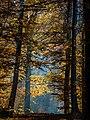 Bruderwald-Herbst-026393-PS-3.jpg