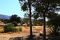 Bsaira District, Jordan - panoramio (79).jpg