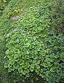 Busteni - plants.jpg
