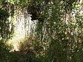 Butrint - Ruinen 2.jpg
