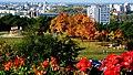 Bydgoszcz - teren rekreacyjny przy ulicy Przodowników Pracy - panoramio.jpg