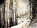 C.1938. Tillamook Burn, Oregon. (33208341203).jpg