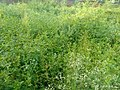CMS chitwan campus ground.jpg