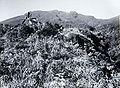 COLLECTIE TROPENMUSEUM De Gunung Gede Tjibodas TMnr 60019057.jpg