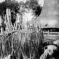 COLLECTIE TROPENMUSEUM Een dodenboom (andong) met kalksteendoodskoppen in kampong Waimanoek Sumba TMnr 10003258.jpg