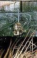 CSIRO ScienceImage 4440 Stream water sampling equipment in the Warren Catchment Adelaide Hills South Australia 1992.jpg