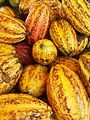Cacao prêt à être consommer.jpg