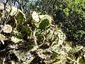 Caldera de Bandama - Vegetation 2.jpg