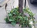 Canadian gardening.jpg