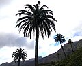 Canary Islands 2018-02-11 (40471195921).jpg