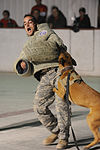Canine attack capabilities demonstration DVIDS235466.jpg