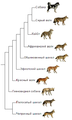 Canis phylogeny (rus).png