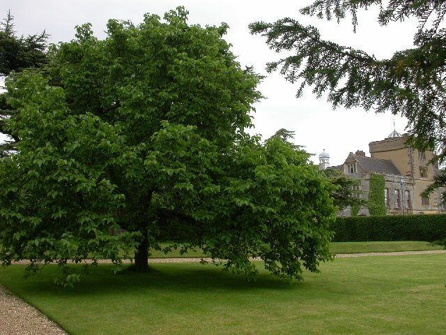 Canons Ashby House and Mulberry Tree - geograph.org.uk - 22987.jpg