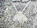 Carcassonne castle cobblestones street.jpg