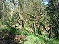 Castle Rings, Donhead St Mary 07.JPG