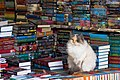 Cat selling books, Krasnodar, Russia.jpg