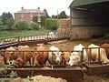 Cattle feeding at Hillend Court - geograph.org.uk - 529488.jpg