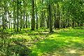 Caw-caw-bottomland-forest-sc1.jpg