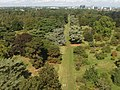 Cedar vista, view north-west from Kew Gardens Pagoda - geograph.org.uk - 226880.jpg
