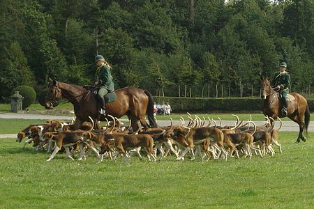 Chasse a courre.jpg