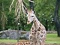 Chester Zoo (9484392079).jpg