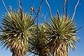 Chihuahuan Desert Research Institute, Fort Davis (3488891819).jpg