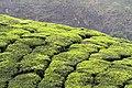 Chinnar Wildlife Sanctuary IMG 9072 (2).JPG