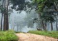Chital in Nagarahole National Park Karnataka....Anticipation.jpg