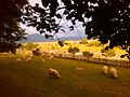 Cijevna.Priroda i drustvo-) - panoramio.jpg